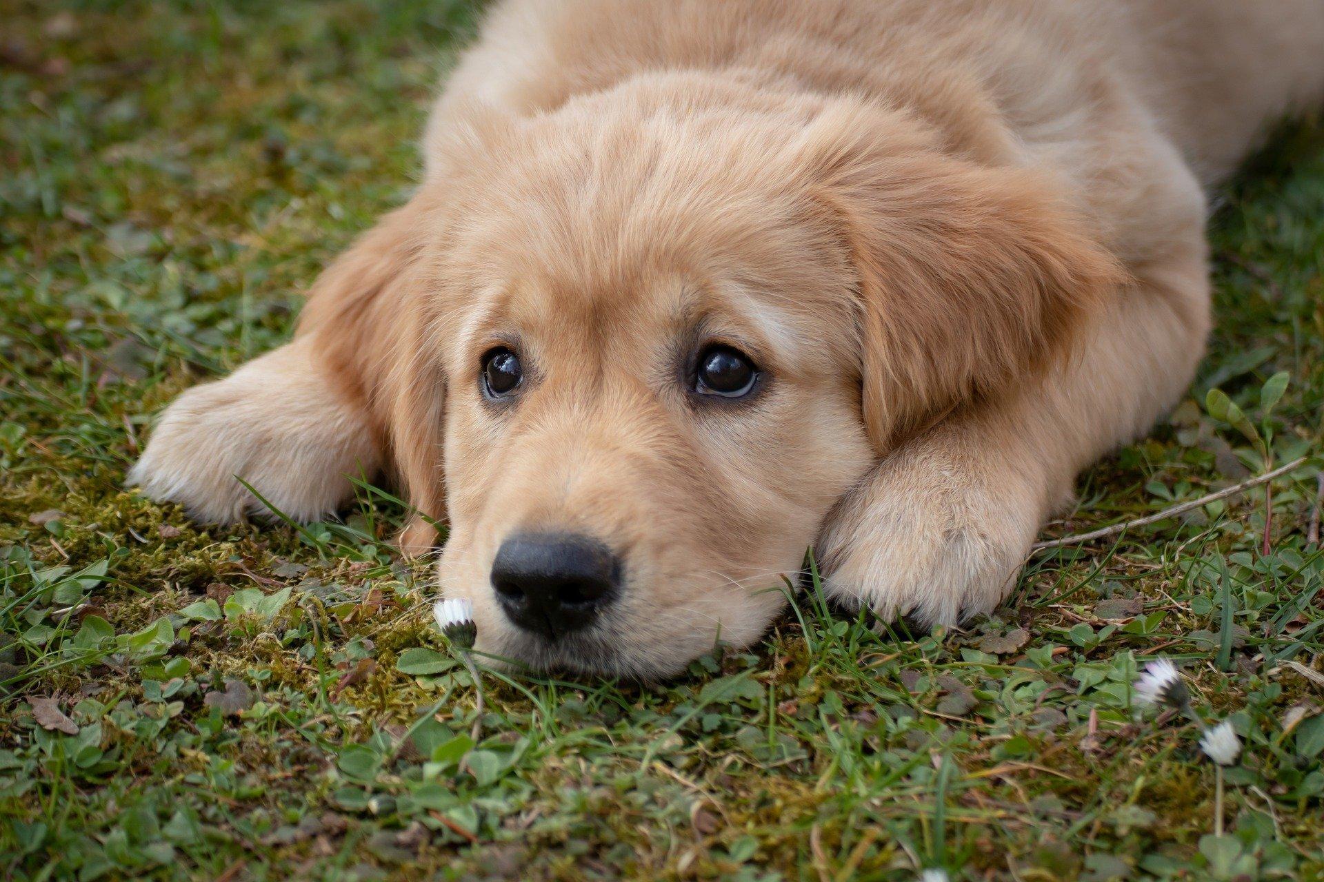Hund My Dog