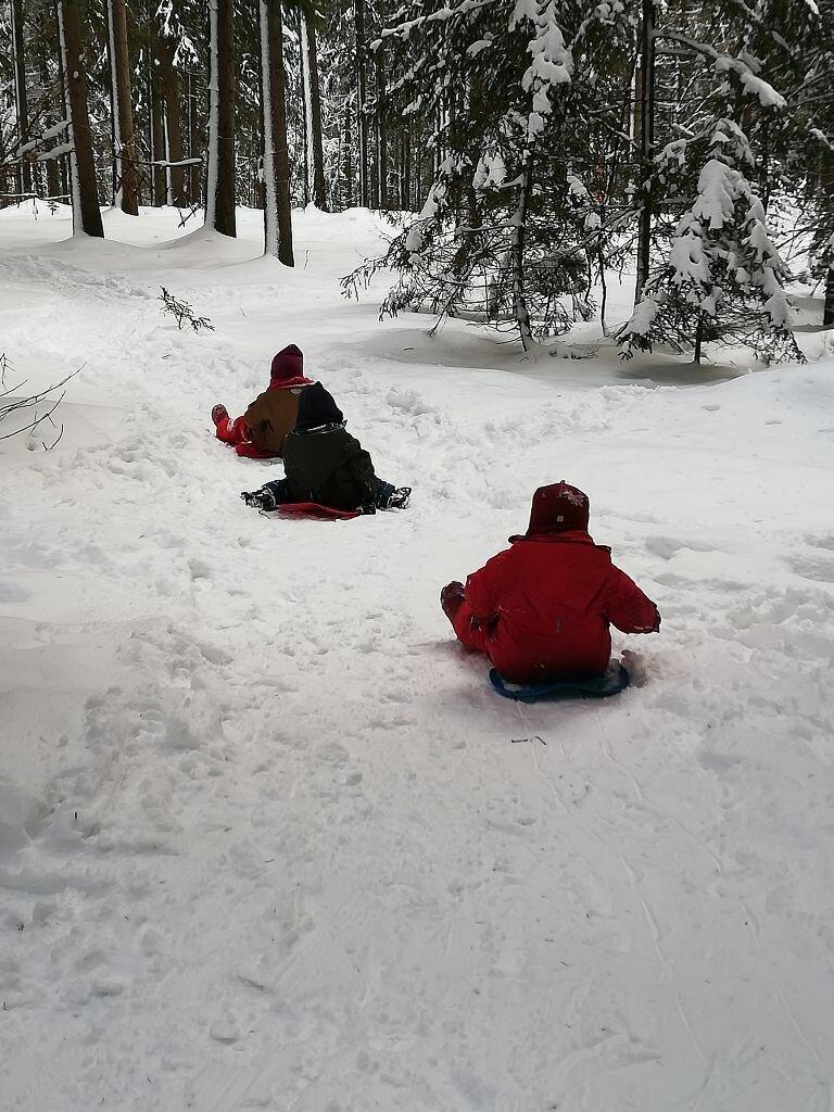 Winter im Wurzelwald