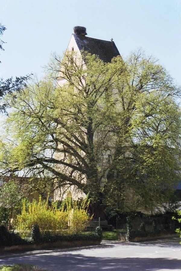 Kirchturm mit Pfarrlinde