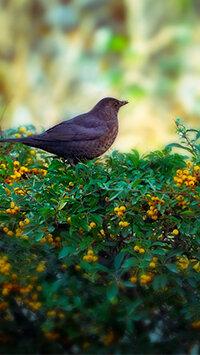 pixabay_bird-3858062