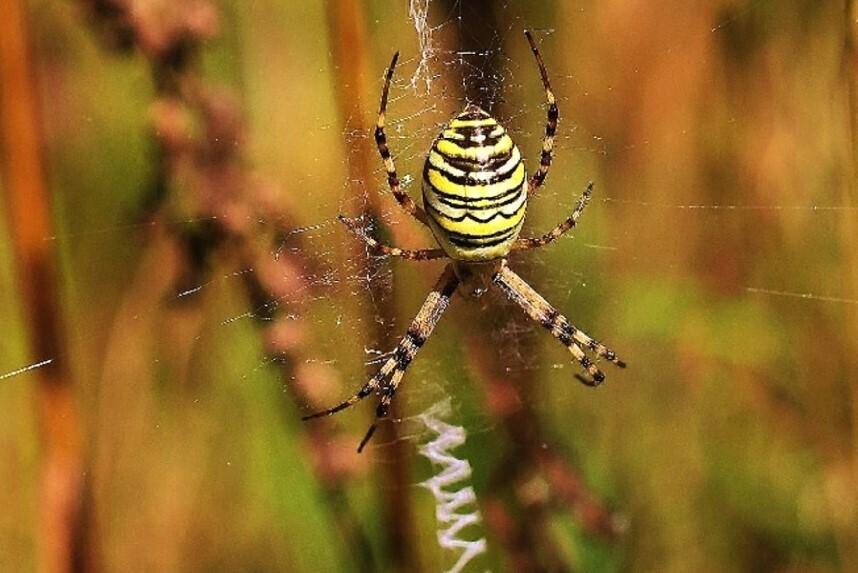 Tarnung des Spinnennetz