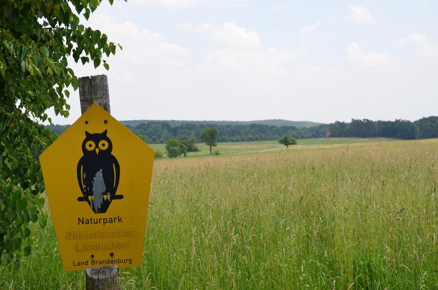 Die Calauer Schweiz liegt im Naturpark Niederlausitzer Landrücken und bietet malerische Wald- und Wiesenlandschaften. Foto: Landkreis OSL