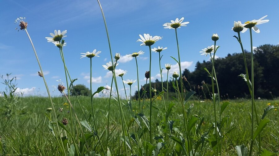 Wiese-Sommerwiese-Natur