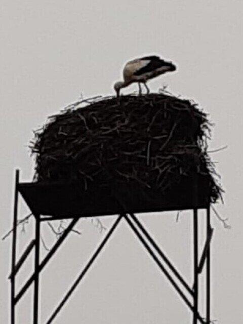 Der Nestvorbereiter