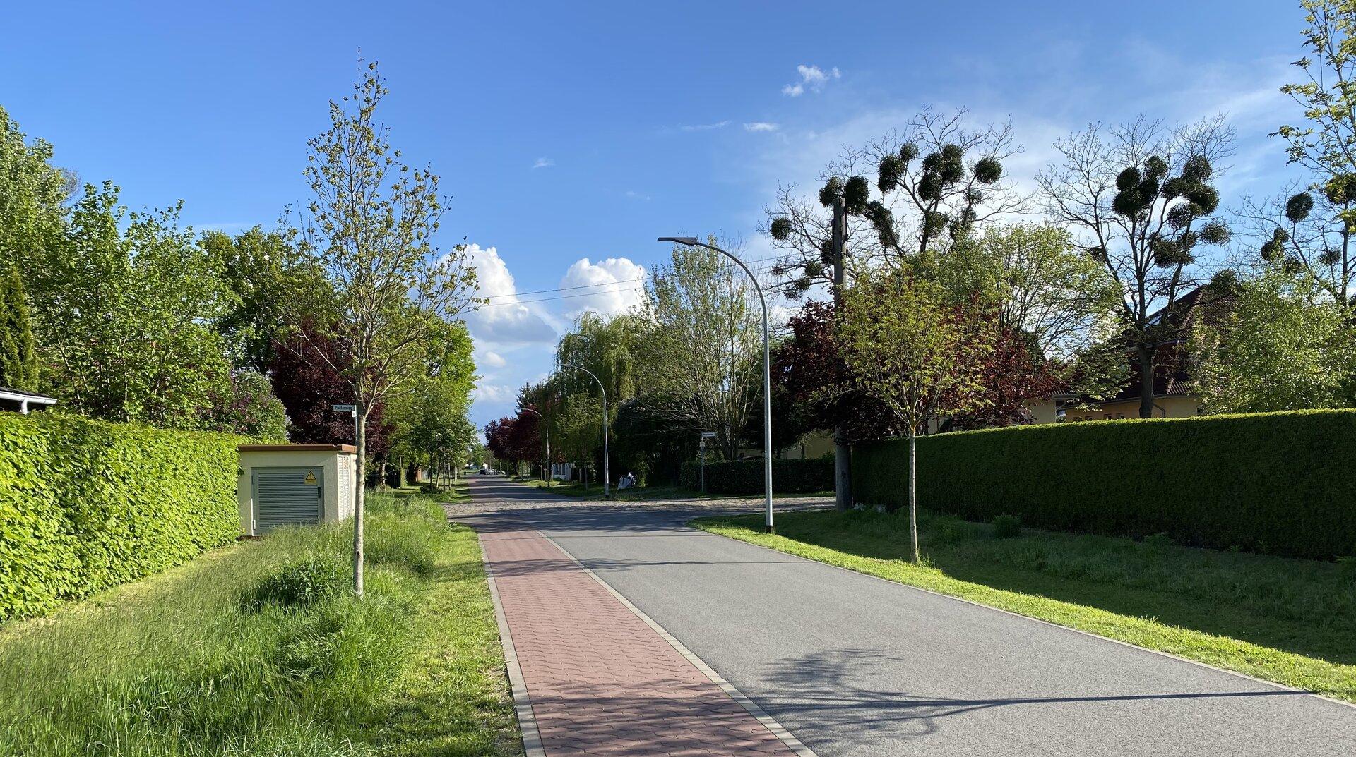Unser Bild zeigt eine Blühwiese an einer Anliegerstraße mit gemähtem Randbereich.