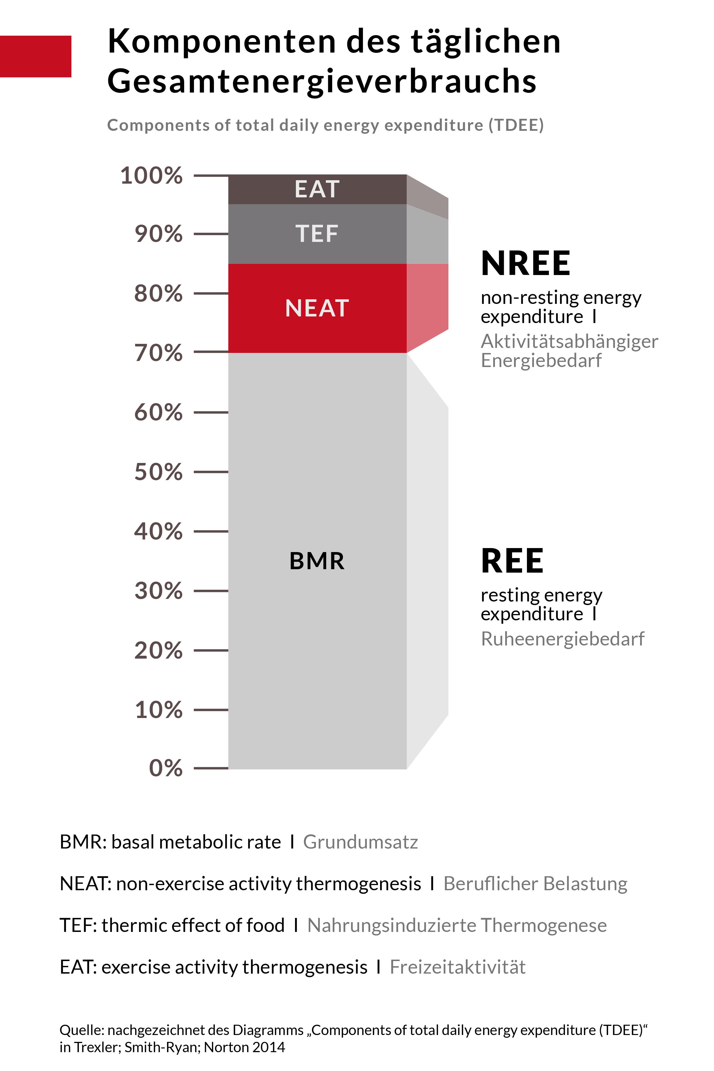 Komponenten des täglichen Gesamtenergieverbrauchs