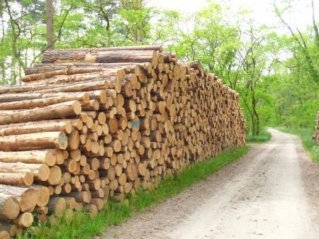 Forstbetrieb Michael Duhr
