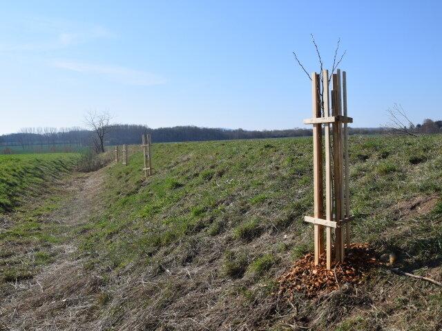 4 neue Bäume für Wolfsbehringen