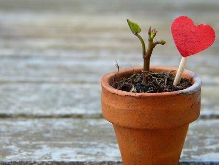 Blumentopf-Trieb-Herz