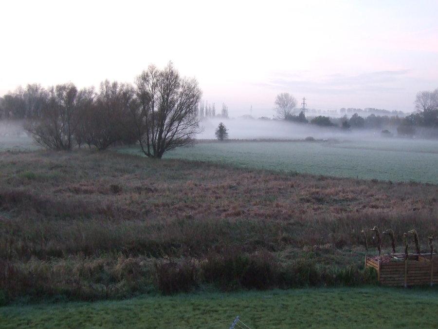 Nebel über Winterwiese