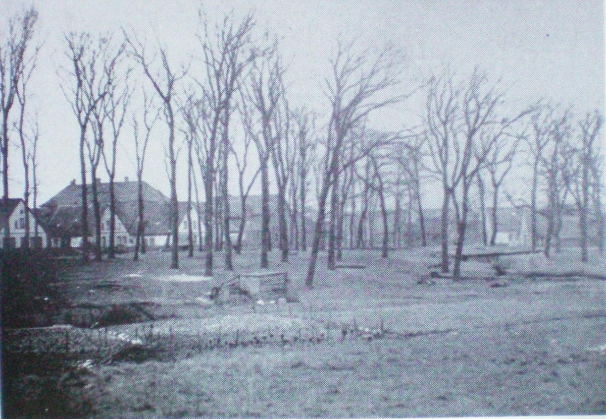 Das Eichholz 1905