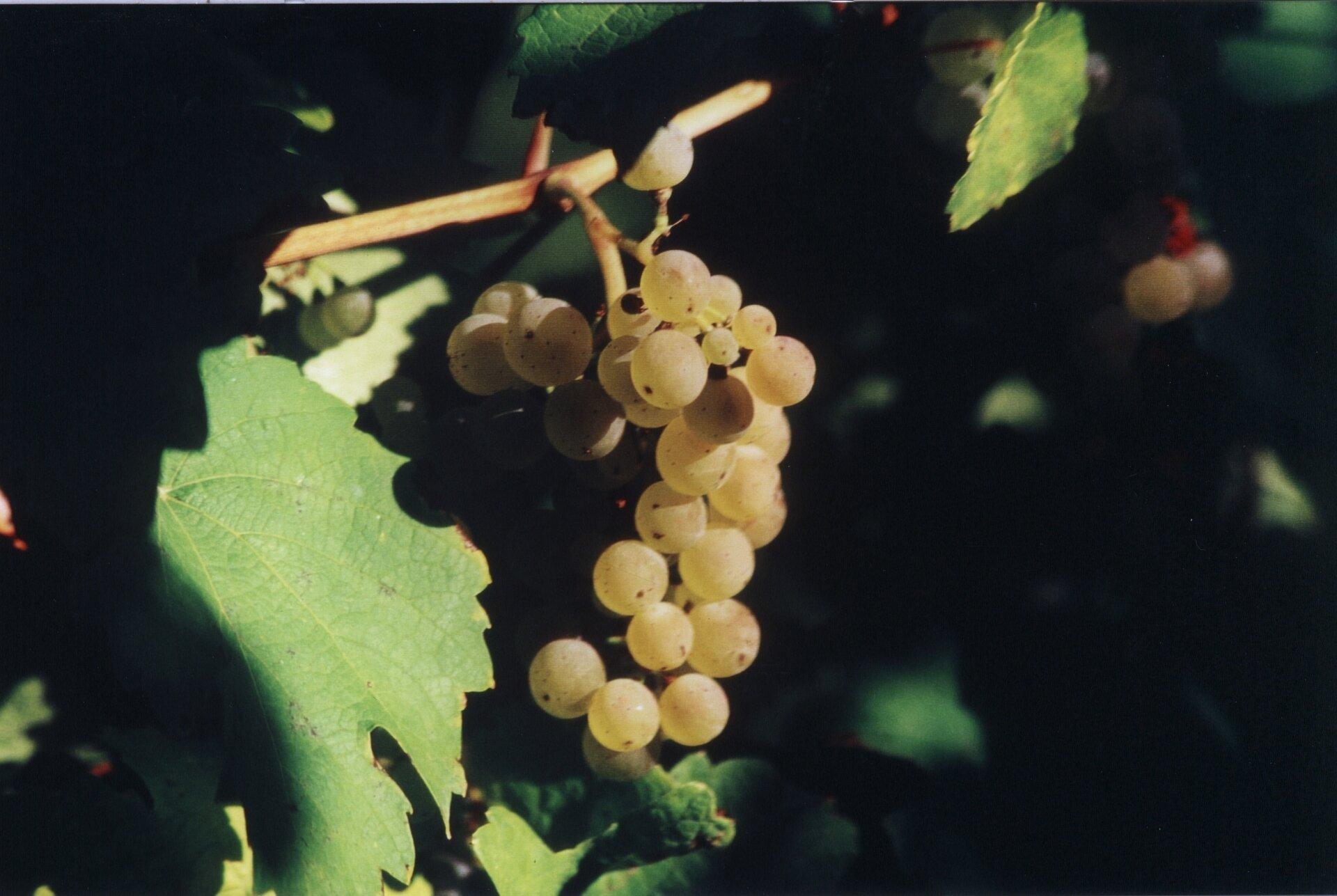 Bilder Wein