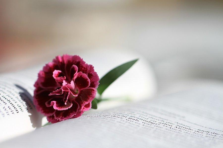 bible-888299_960_720