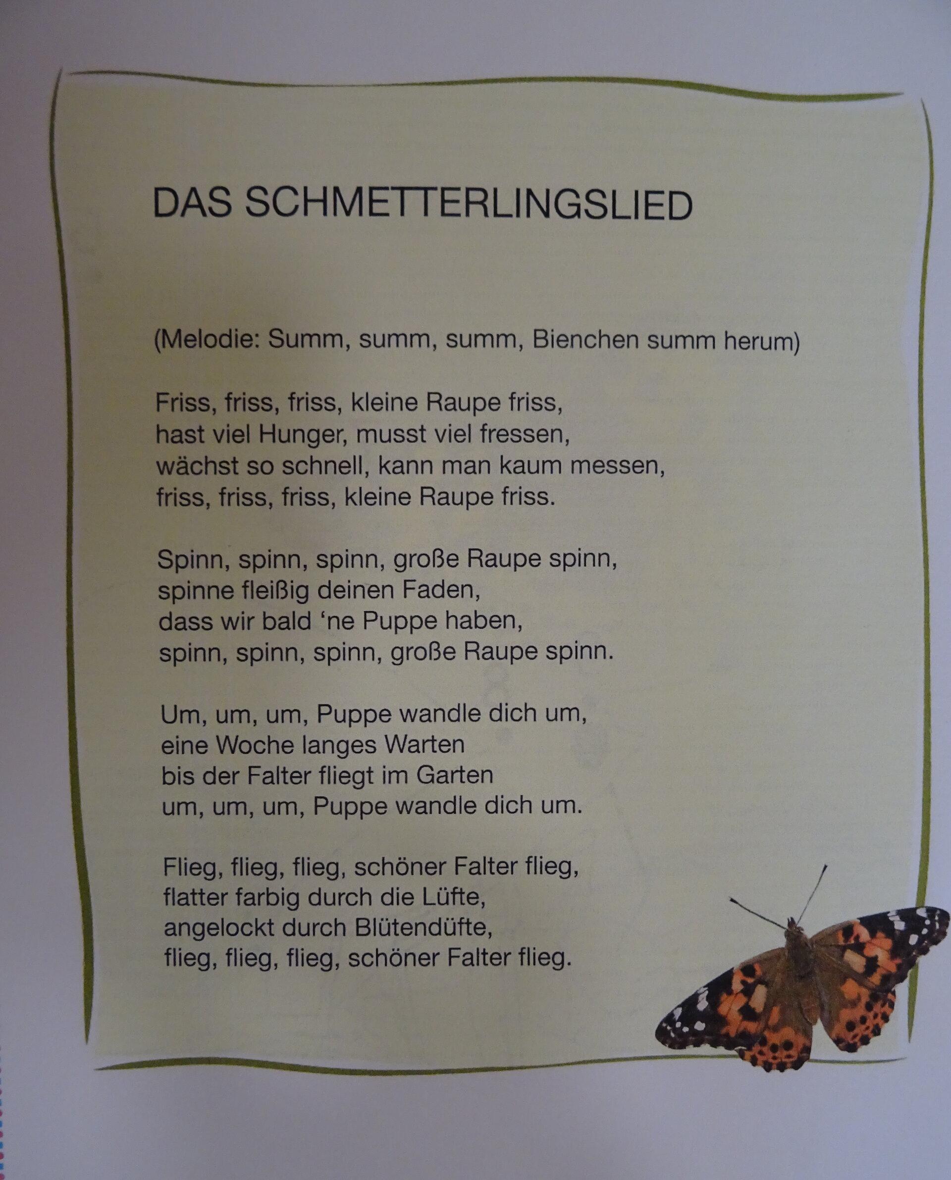 Schmetterlingslied