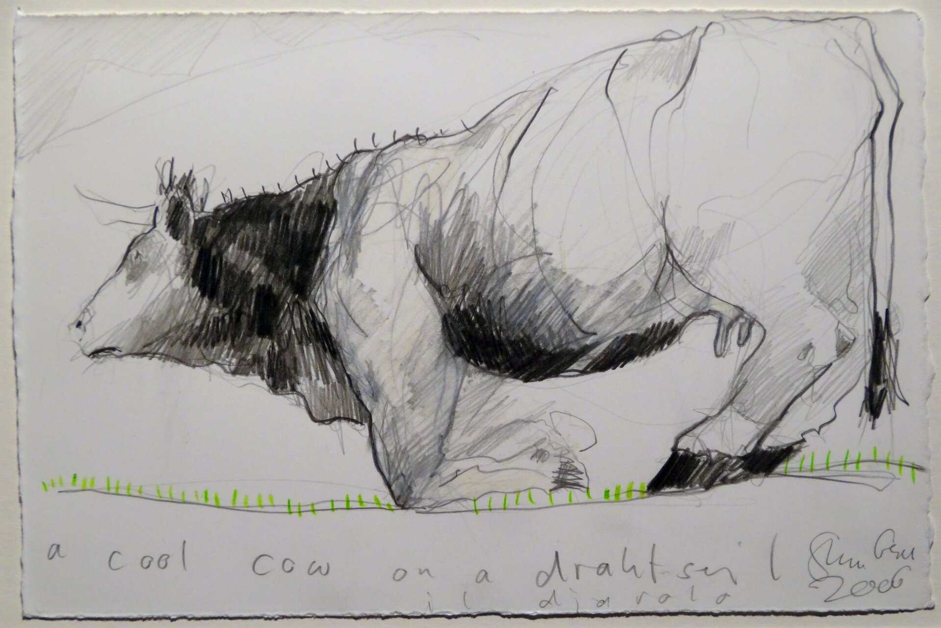 a cool cow on a drahtseil