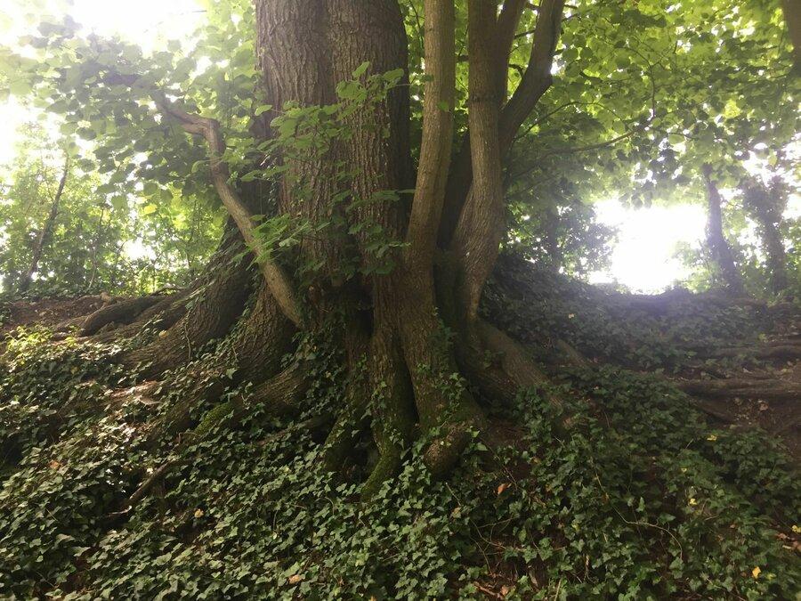 Natur_heilt_15