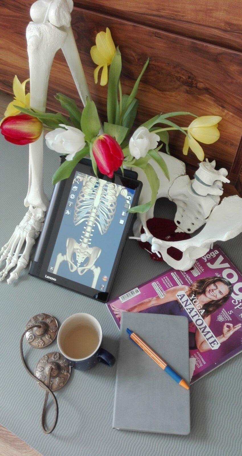 Anatomieworkshops_nb