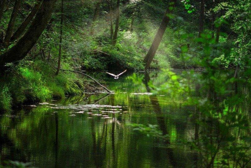 Wald Wasser