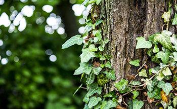 Park Engelscher Garten Klosteranlage Inselstadt Malchow