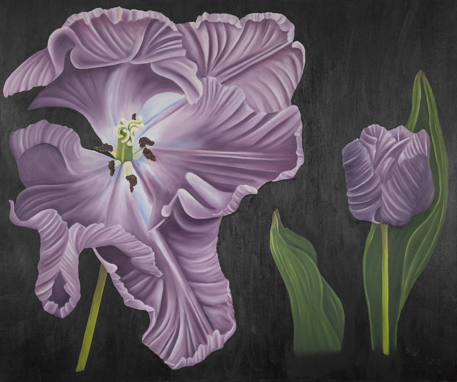 Lila Tulip