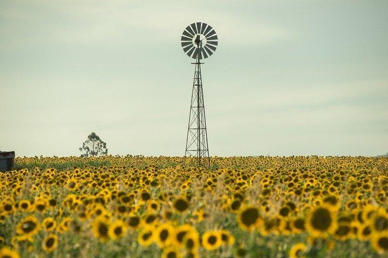field-4400519_1920