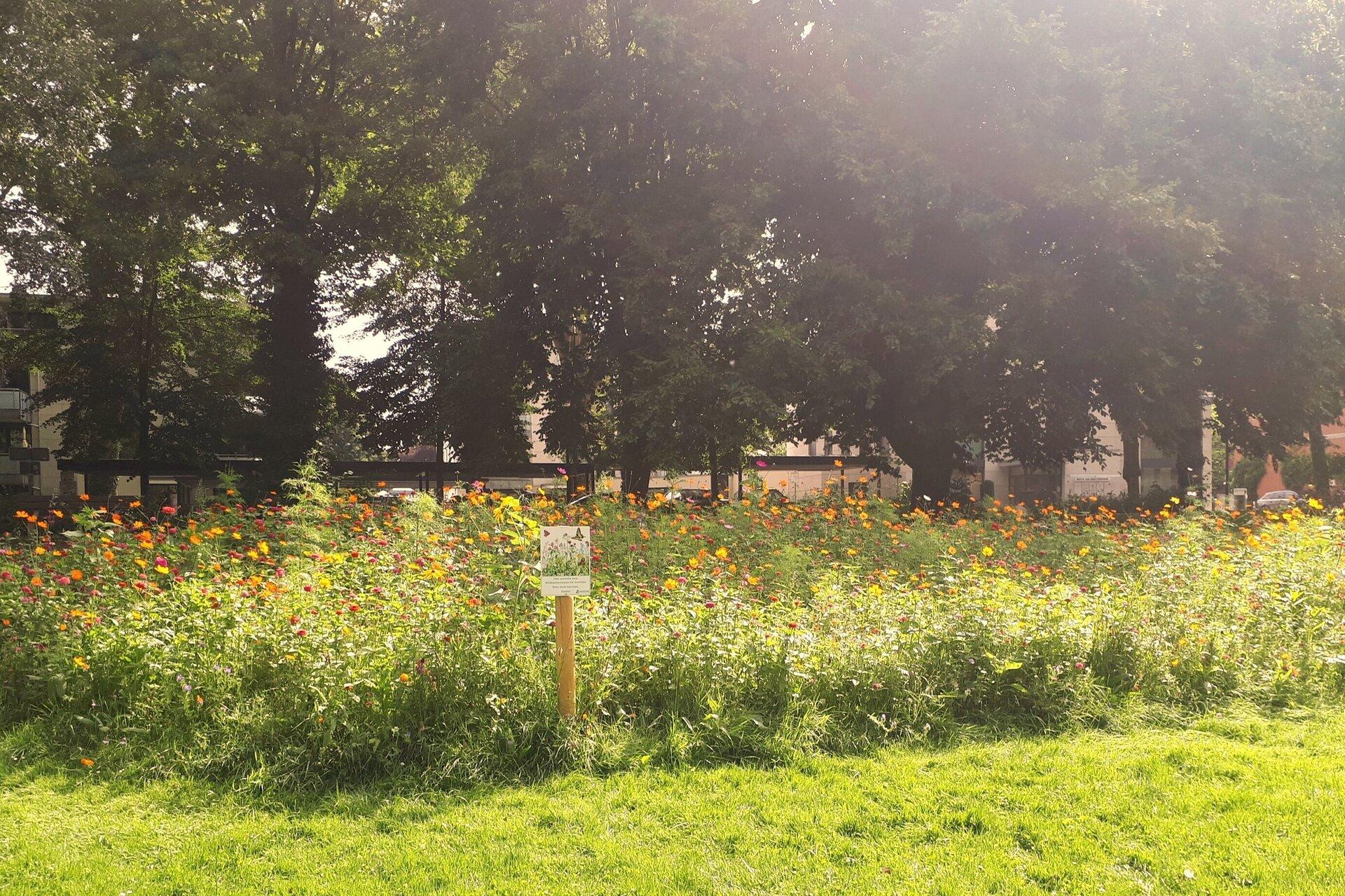 Wildblumen Emscherpark
