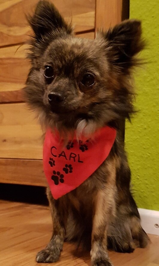Unser Carl