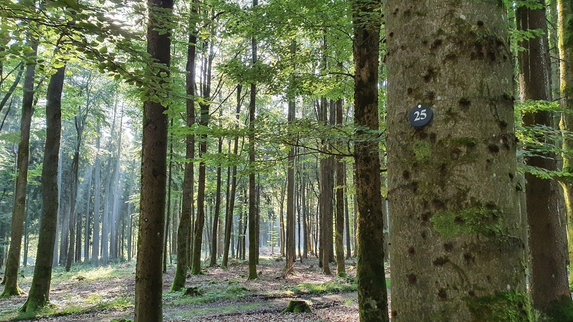 Bestattungswald Foto Heike Bluhm