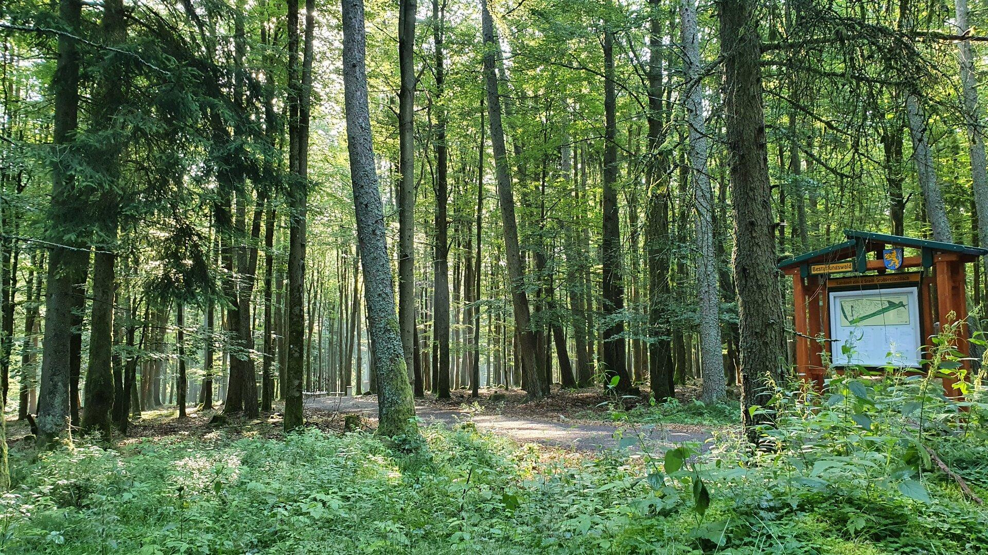 Eingangsbereich des Bestattungswaldes