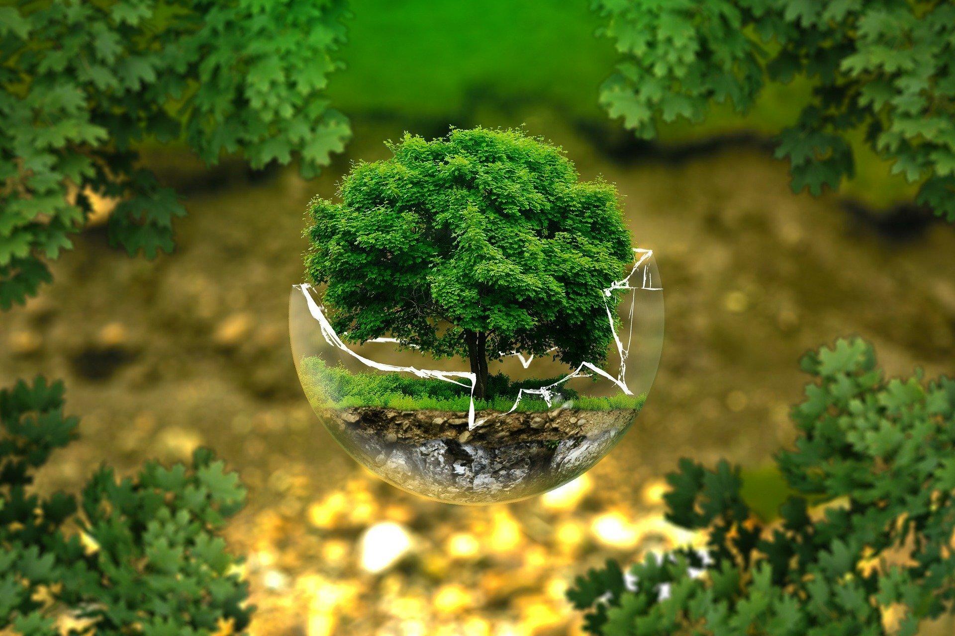 Baum in Glas, Bild von ejaugsburg auf Pixabay
