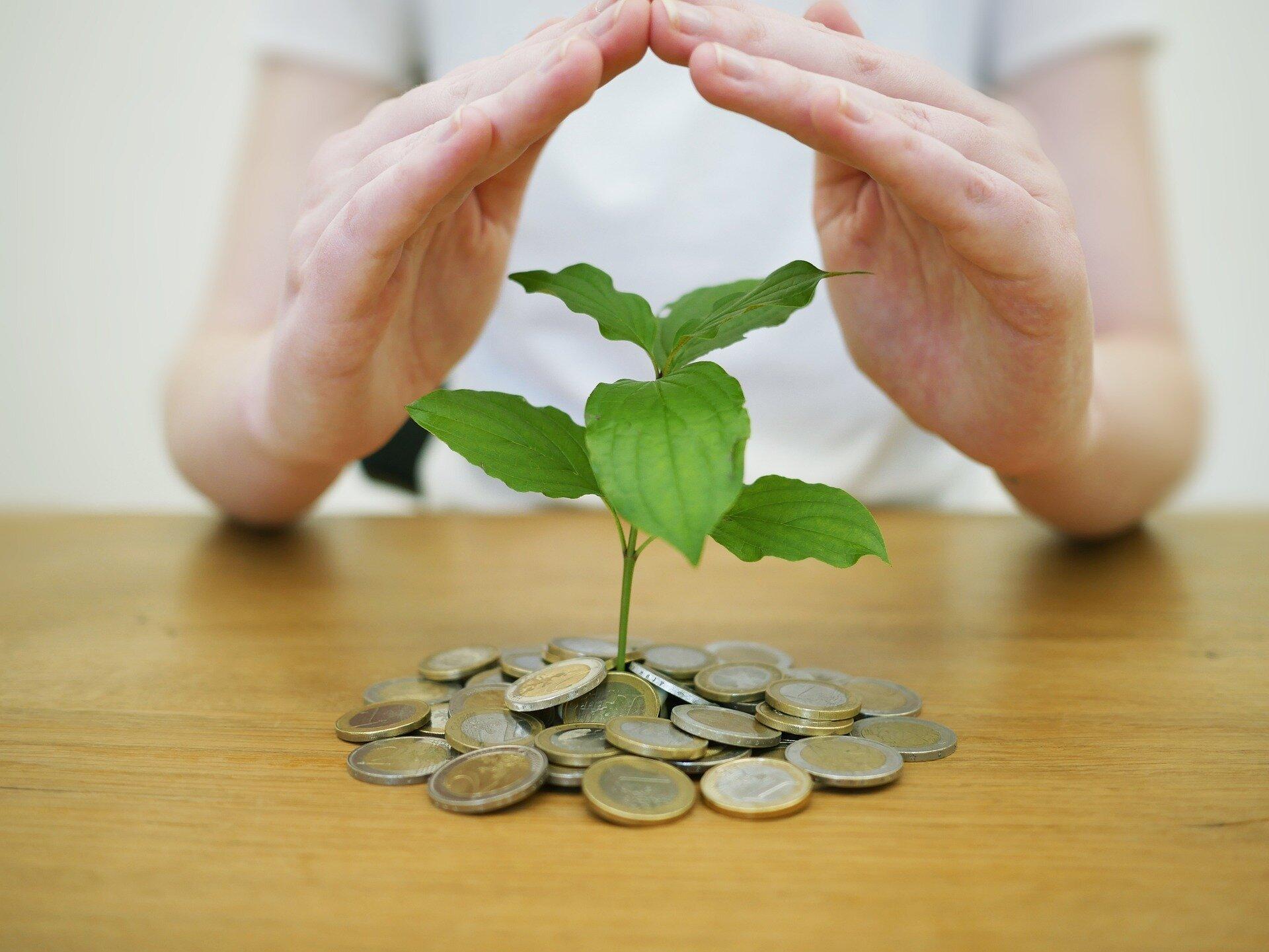 Geld Pflanze Hand