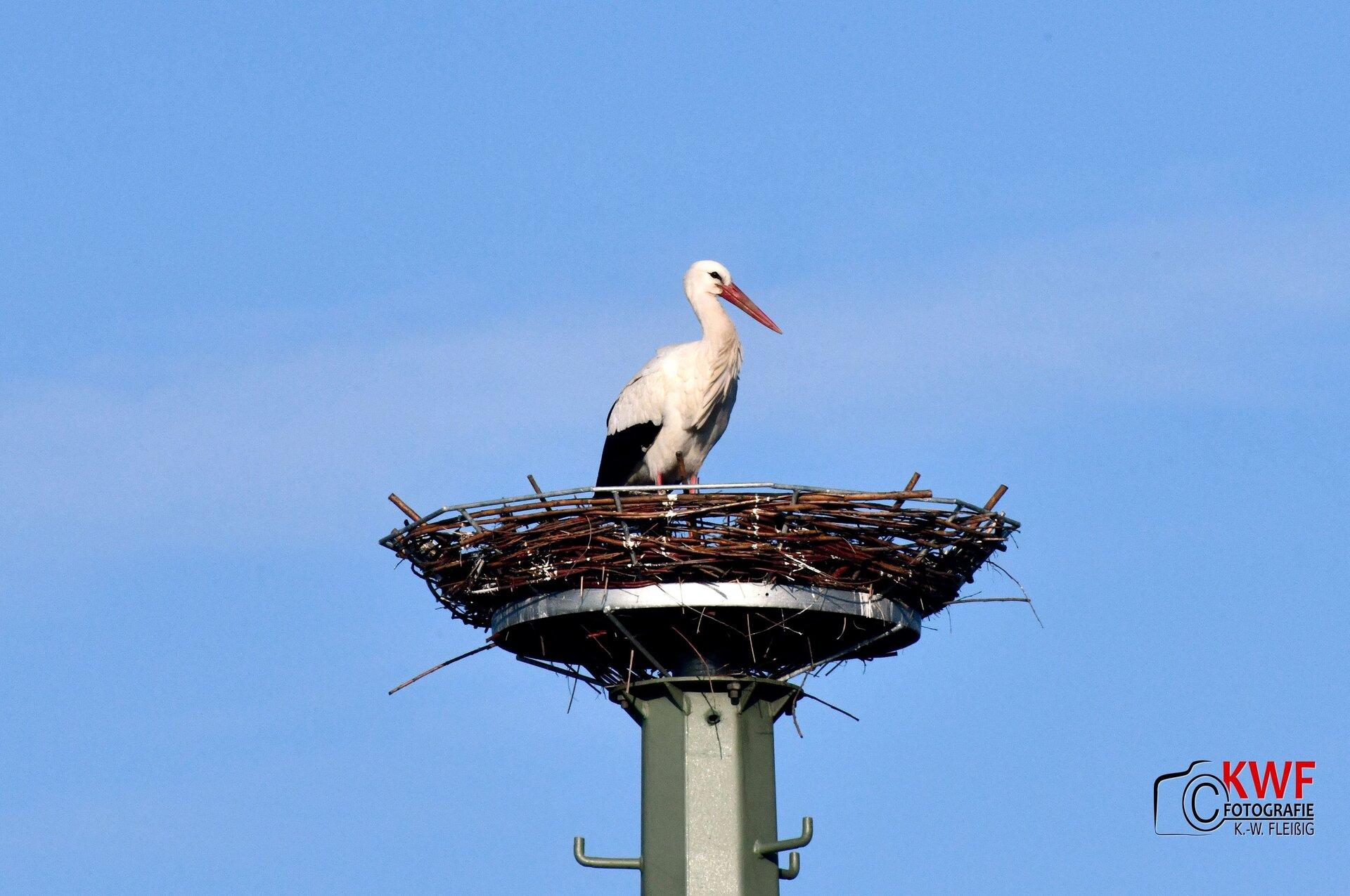 Storch im Harraser Storchenhorst