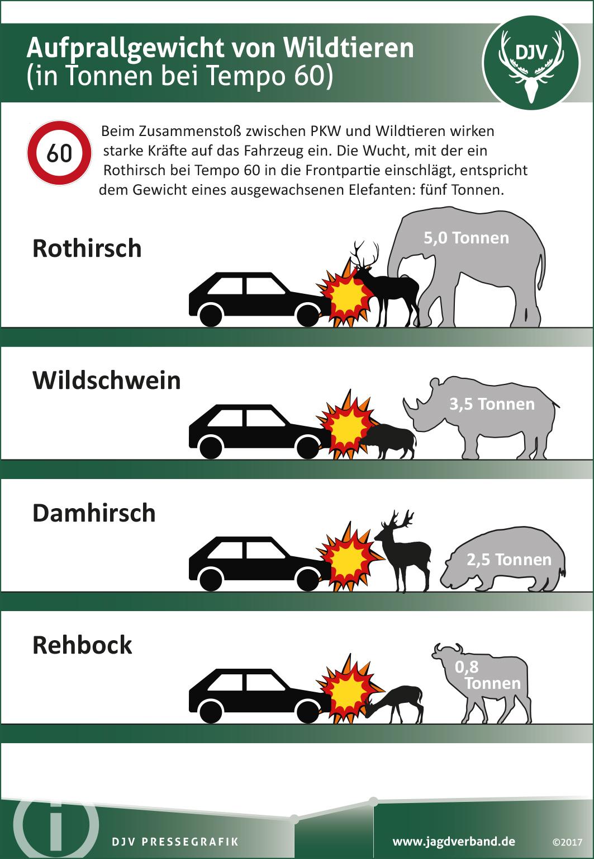 Aufprallgewicht Wildtiere