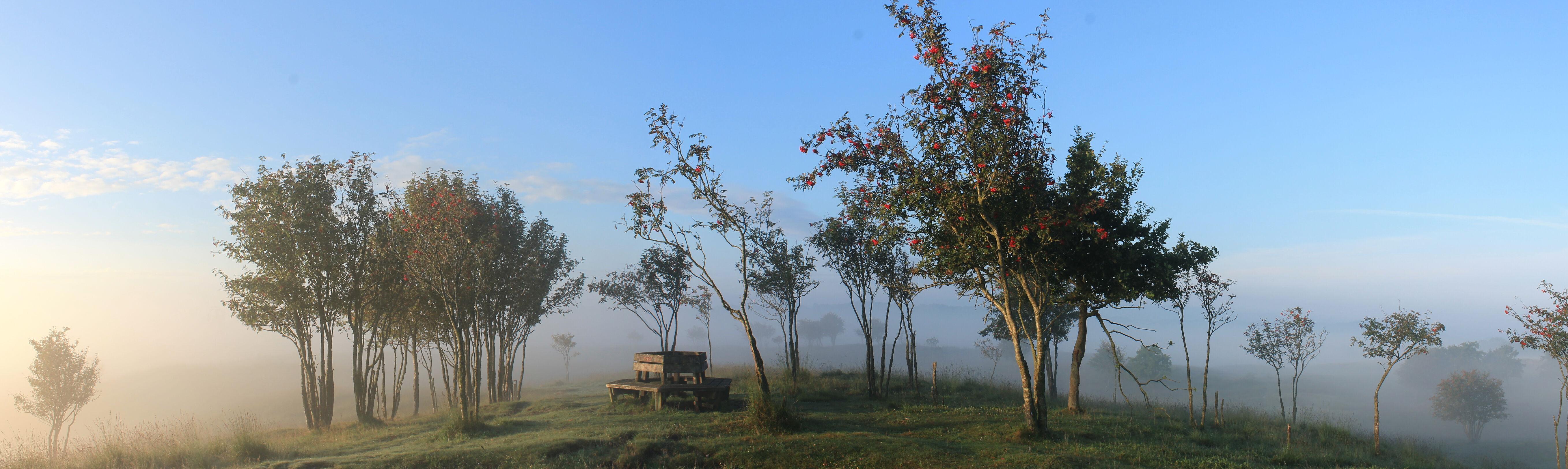 Morgenstimmung am Treßsee