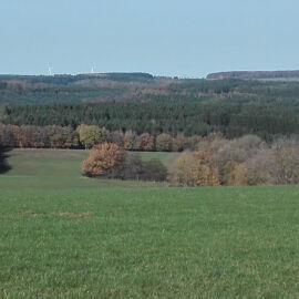 Waldrand am Feld