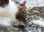 Katzendurst