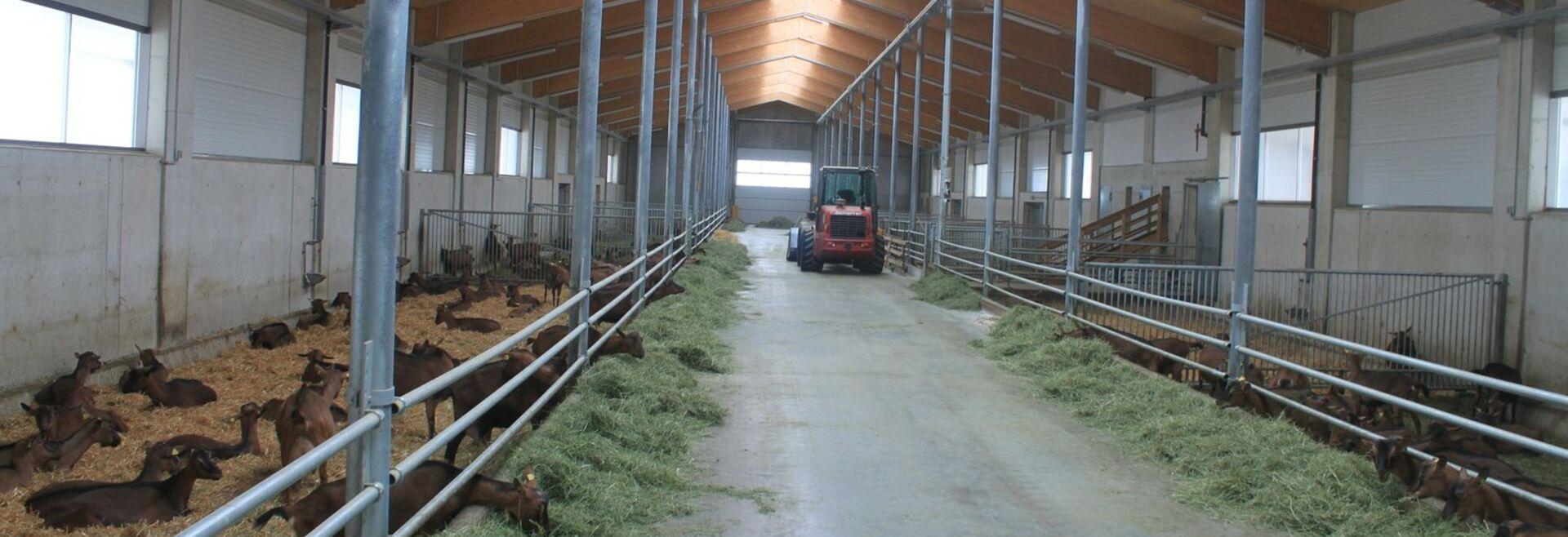 Moderner Milchziegenstall