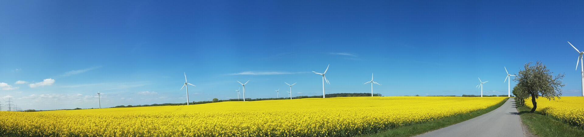Blick auf Rapsfeld und Windmühlen vor Wusterhusen aus Gustebin kommend