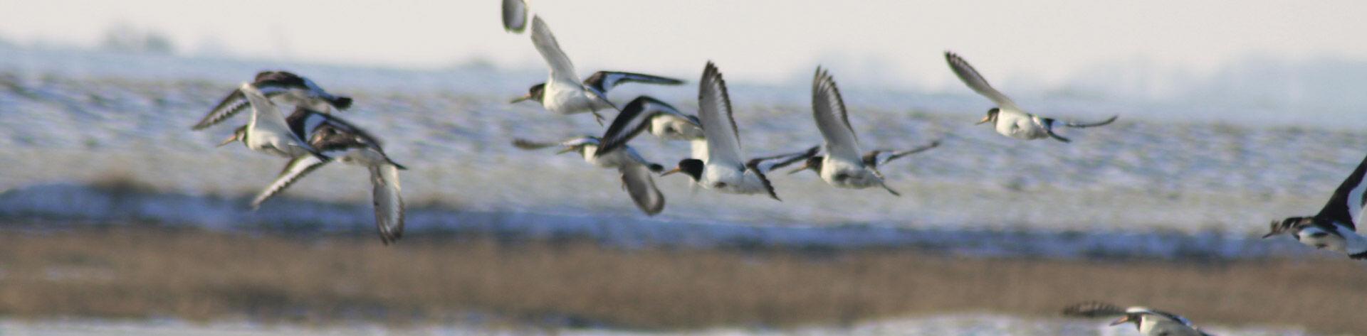 Watt Vögel