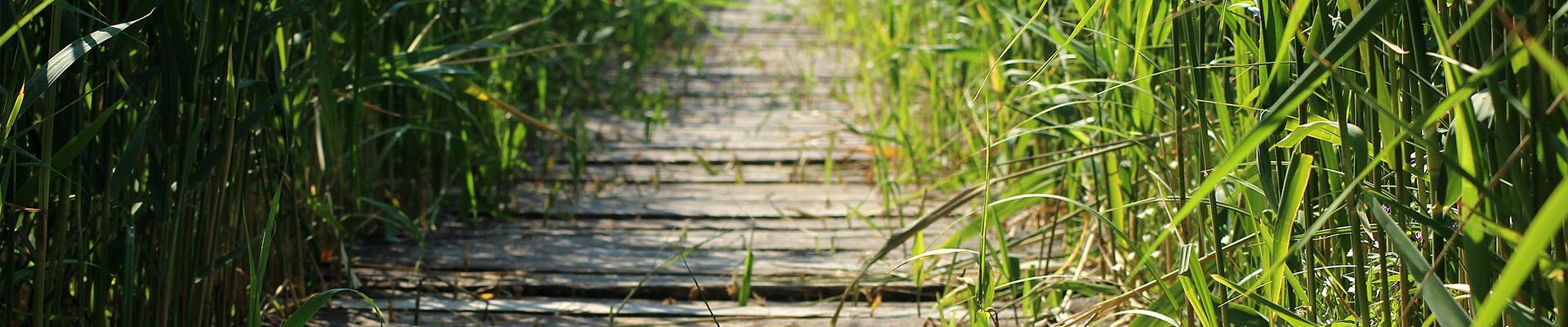 footbridge-3437246 Pixabay