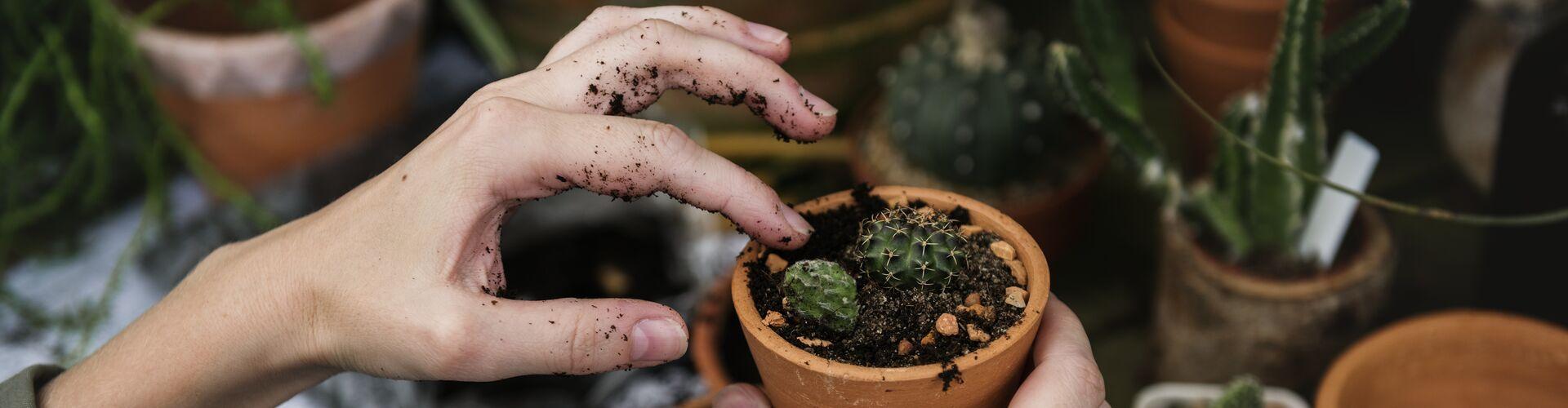 Dieses Bild zeigt die Arbeit in einer Gärtnerei, zu sehen ist die Hand eine_r Arbeitnehmer_in in Großaufnahme, die eine Pflanze eintopft