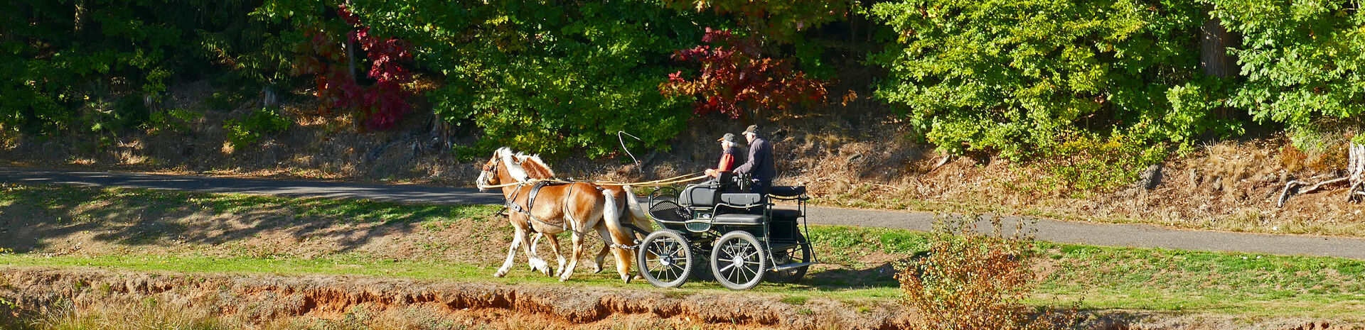 Herbstliche Kutschfahrt am Silbersee - Bildaufnahme durch Horst Roth