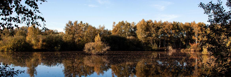Herbst im Biotop