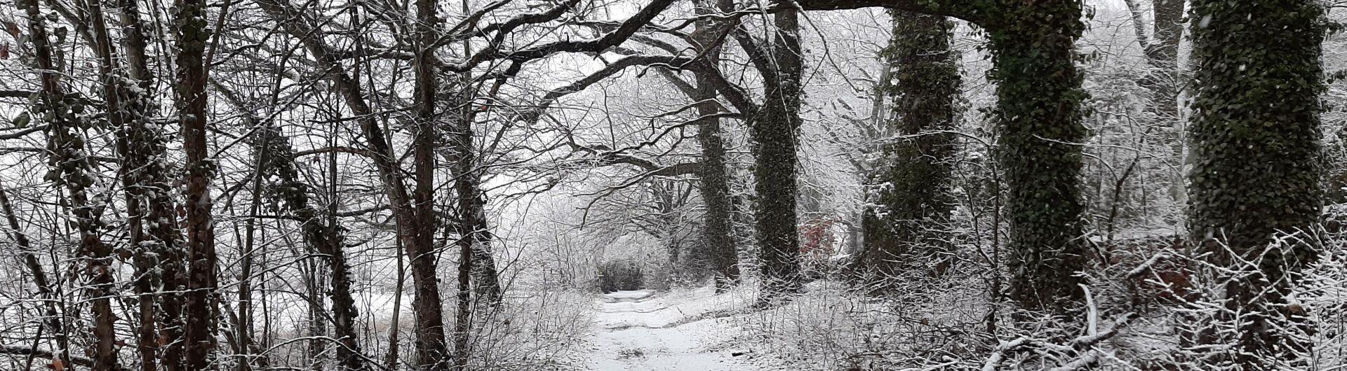 Schleichwege, 23.01.2021, Fotorechte: U. Schöne