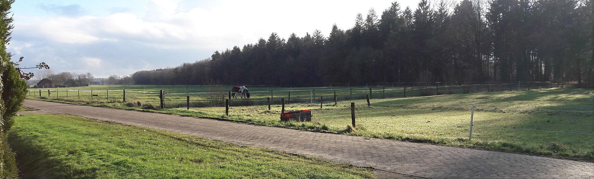 Landschaft mit einer Kuh in der Gemeinde Moorweg