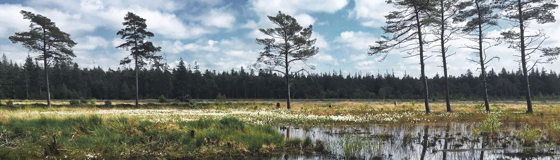 Heideweiher im Süderlügumer Forst