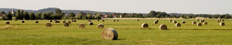 Feld Schöna