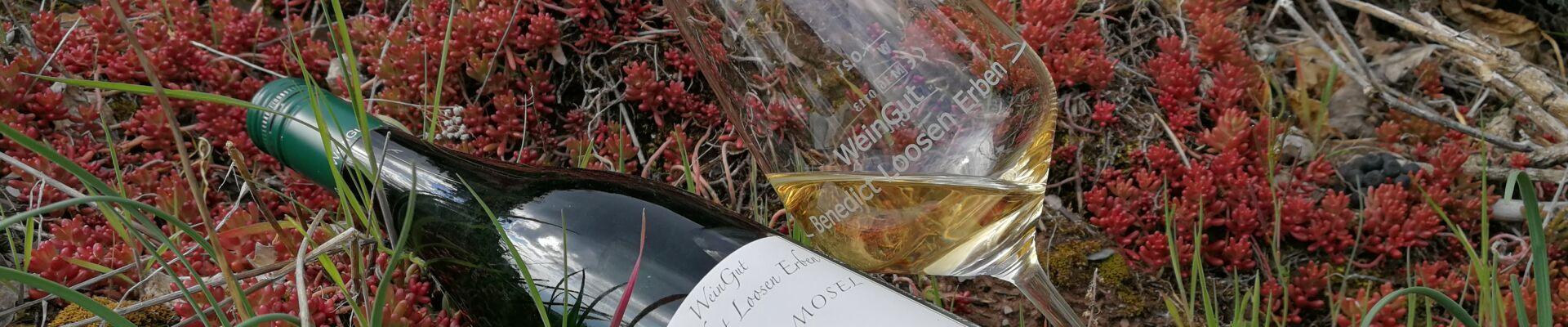 Riesling vom WeinGut Benedict Loosen Erben geht immer
