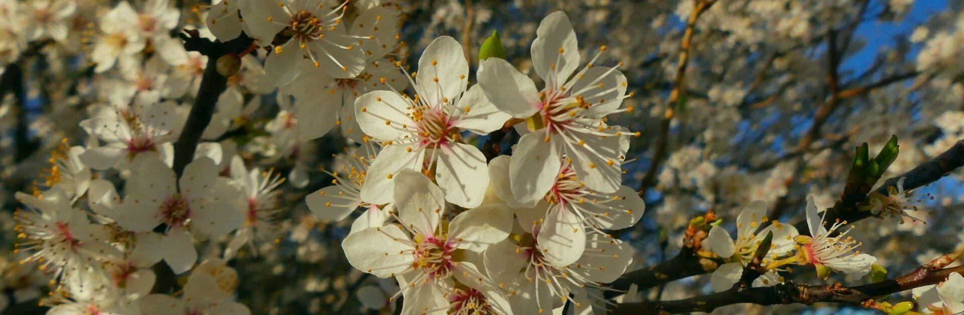 Buckower Blüten (c) Stefan Nitsche